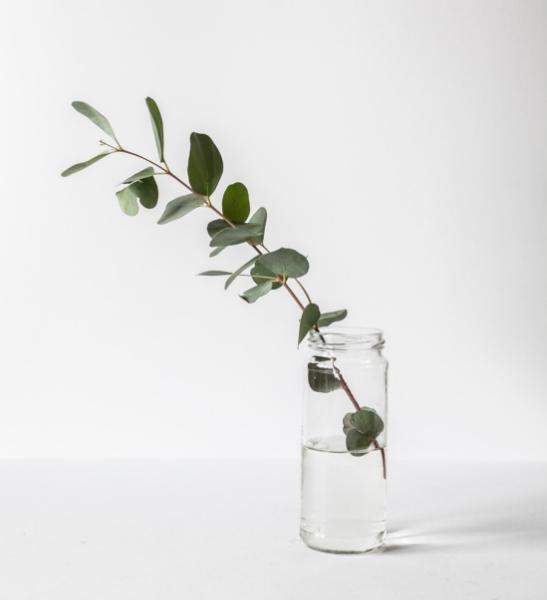 Une plante qui pousse ? Connotation des activités d'une société